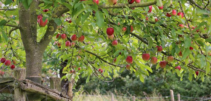 """Cursus vruchtbomen snoeien bij """"de Veldhorst"""" voorlopig uitgesteld"""