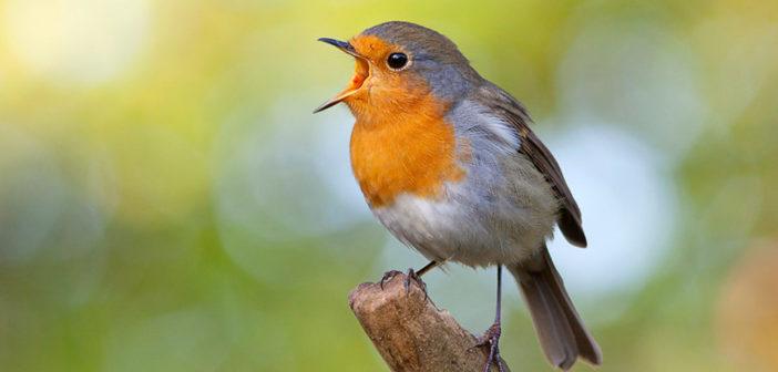 1104 vogels geteld in Harfsen